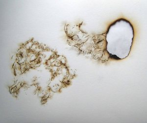 owl and burn for wordpress blog